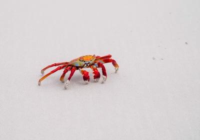 Savor Fun at the SunWest Crab & Shrimp Festival