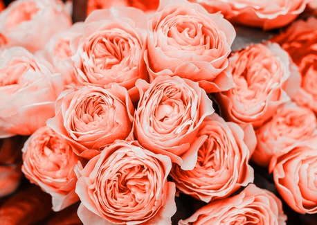 Coral Cuisine: How to Embrace the 2019 Color of the Year