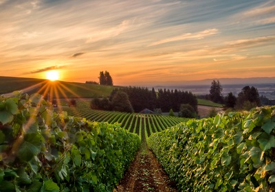 Traveling the Pacific Northwest's Wine Scene