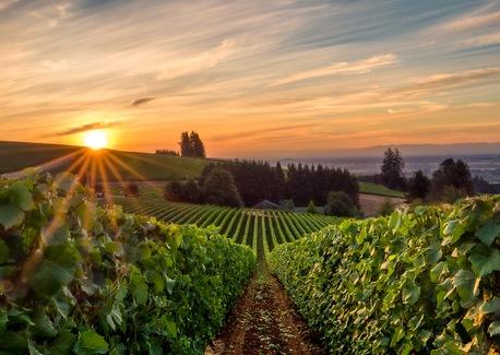 Traveling the Pacific Northwest's Wine Scene