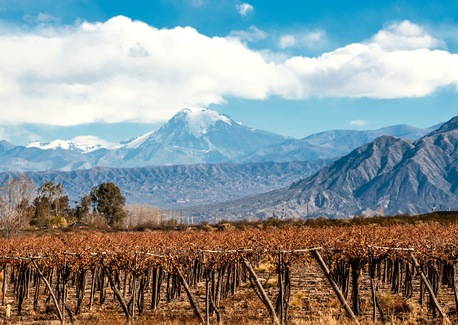 Discover Argentina's Flavorful Flair