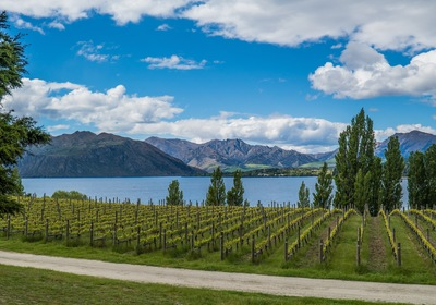 Whitehaven Wine: Exploring a Down-Under Destination